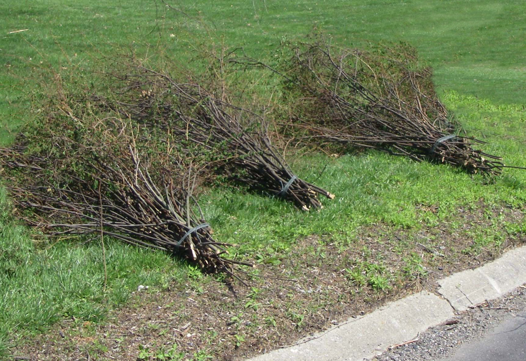 orderly brush piles_3
